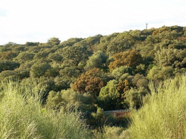 med-bosque-mediterraneo-a