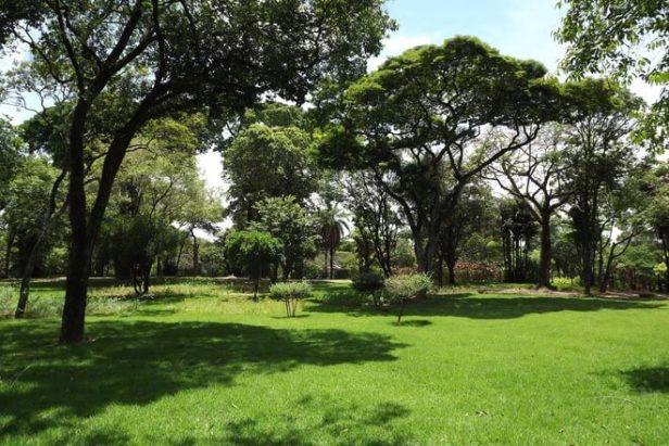 med-jardin-cesped-grama