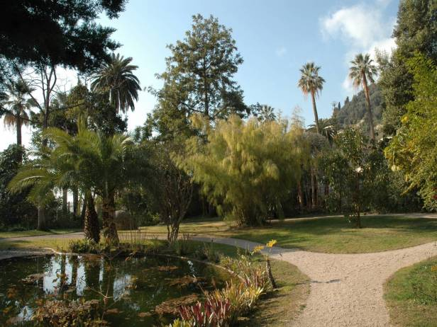 med-jardin-exotico-de-val-rhameh-menton-costa-azul-otatea-acuminata