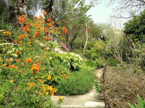 med-jardin-exotico-de-val-rhameh-menton-costa-azul-streptosolen-jamessonii