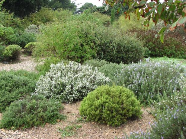 med-jardin-mediterraneo-con-agua-escasa