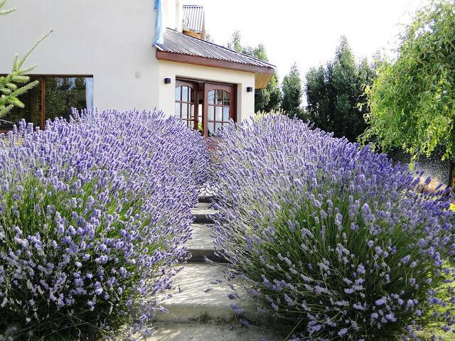 Capitulo ix jardin mediterraneo jardines sin fronteras Plantas jardin mediterraneo