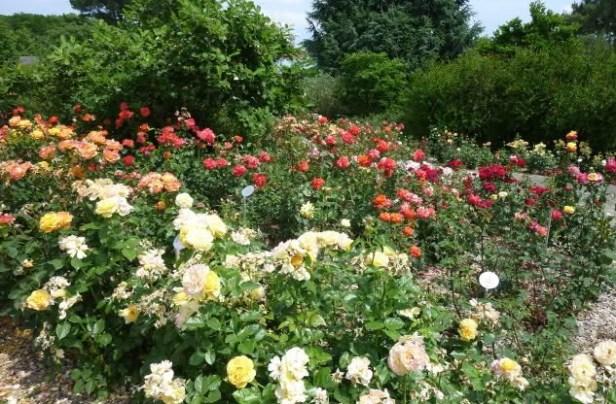 nantes-rosaleda-del-parc-de-beaujoire