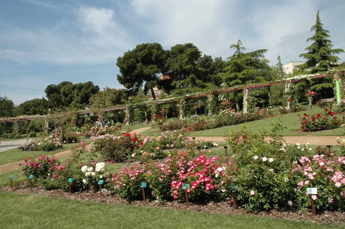 Rosaleda del parque cervantes jardines sin fronteras - Front de liberation des nains de jardins ...