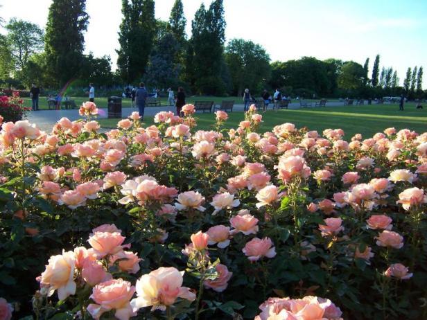 queens-mary-rose-garden