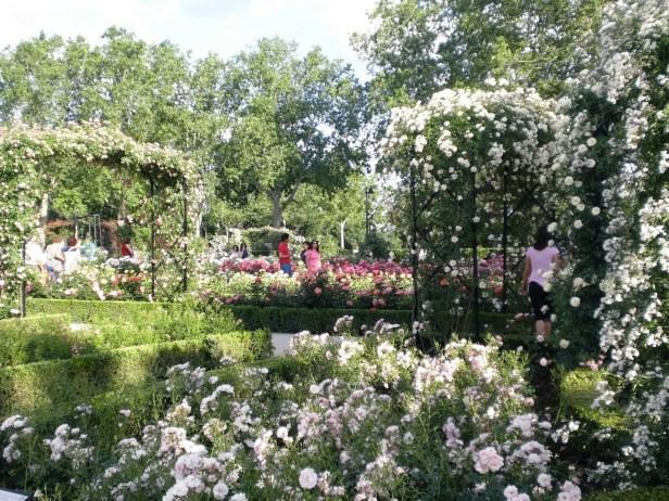 rosaleda-del-retiro
