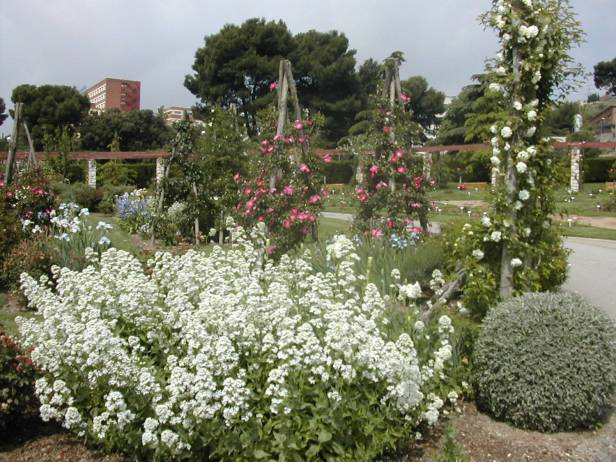 rosaleda-parque-cervantes-centranthus