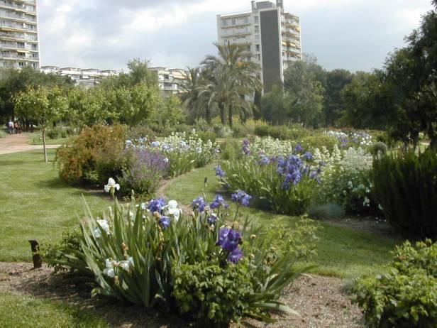 rosaleda-parque-cervantes-iris-germanica