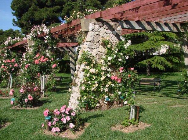 rosaleda-parque-cervantes-x3
