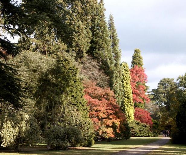 westonbirt-arboretum-n4