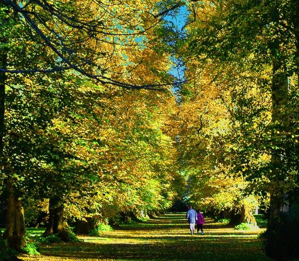 westonbirt-arboretum-gloucestershire-2