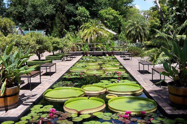 afr-stellenbosch_university_garden-d
