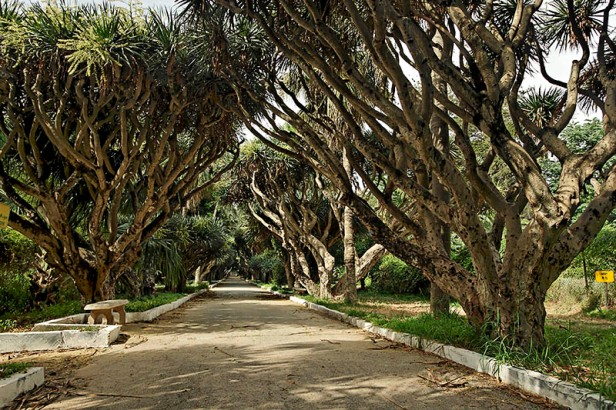 algeria-hamma-garden-xz