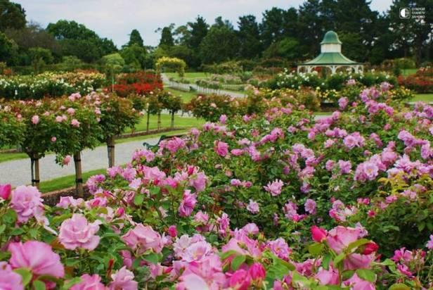 au-victoria-state-rose-garden