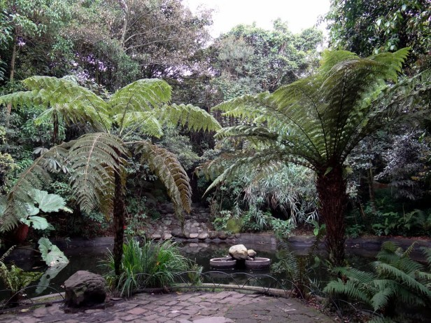 bogota-botanic-garden-df
