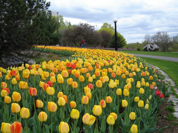 ca-garden_of_the_provinces_and_territories_-_tulip_festival_-_4