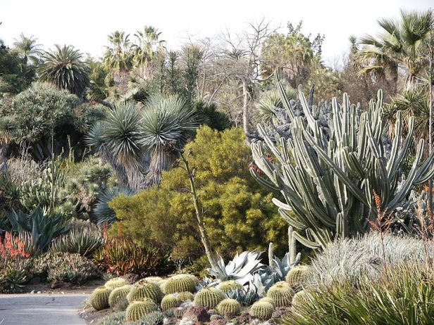 california-huntington_desert_garden_cactus_etc