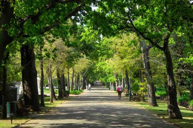 cape-town-gardens