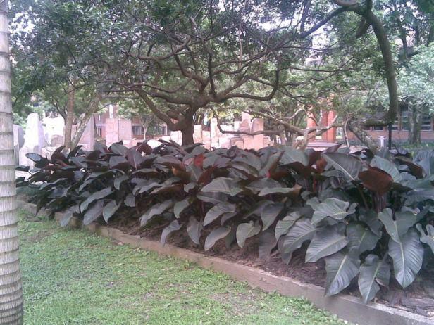 colombia-medellin-jardines-universidad-x25