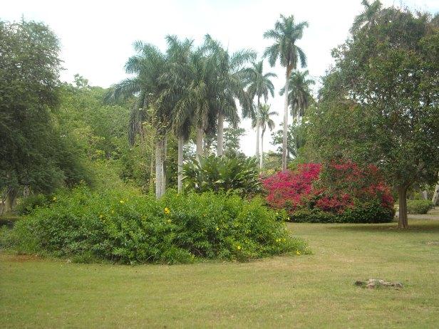 cuba-jardin-botanico-nacional-2