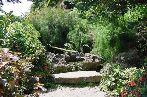 cuba-jardin-japonesen-el-botanico