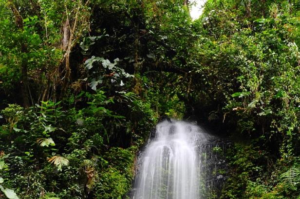 El Pahuma Orchid Reserve
