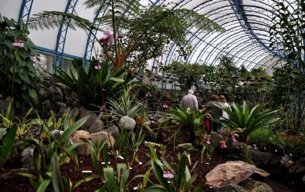 Jardines de latinoamerica costa rica y ecuador jardines for Jardines verticales quito ecuador