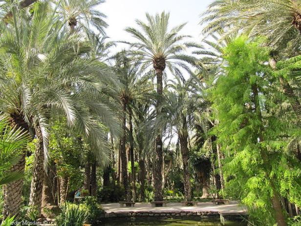 elche-jardin-del-huerto-del-cura-atas