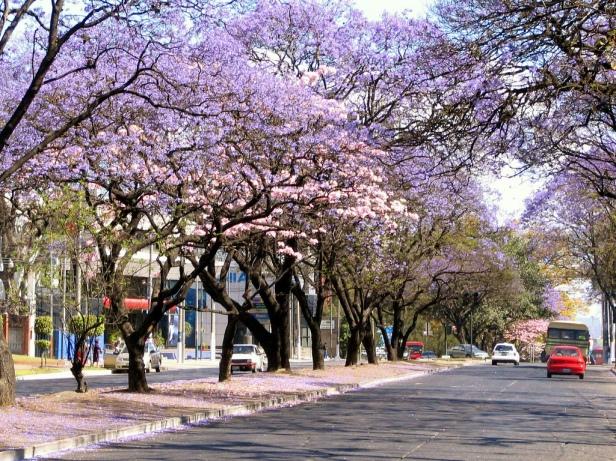 guatemala-avenida-castellana