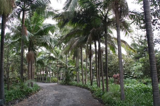 h-jardin-botanico-de-la-marquesa-de-arucas