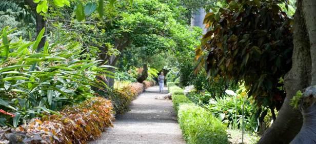 h-jardin-de-aclimatacion-de-la-orotava