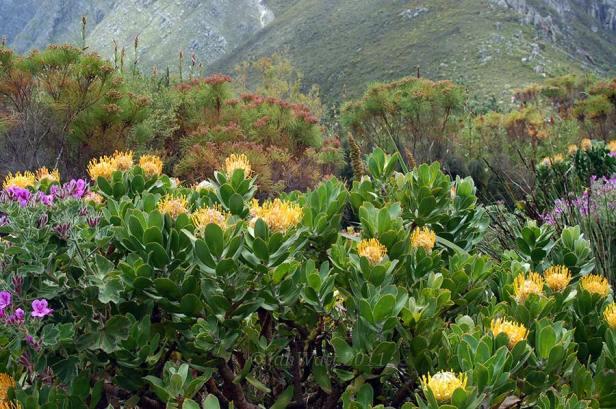 harold-porter-national-botanical-garden-kbz
