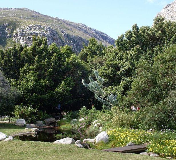 harold-porter-national-botanical-gardenrapanea_trees_and_waboom_in_harod_porter_gardens