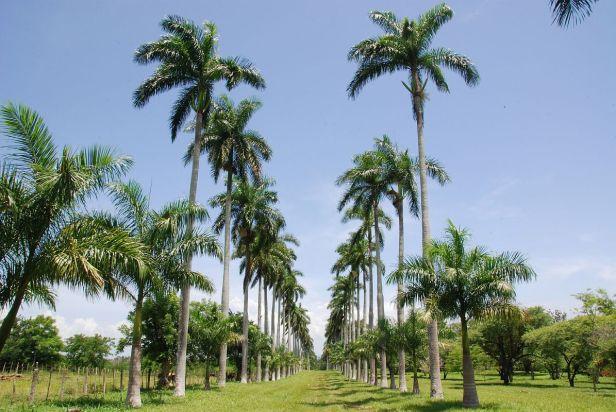 jardin-botanico-de-cienfuegos-xju-2