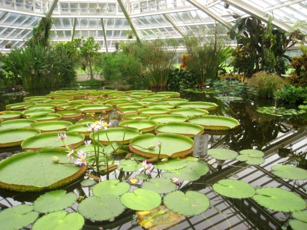 jardin-botanico-de-teheran-ac