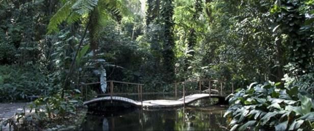 jardin-botanico-la-laguna-el-salvador-jardinbotanicolalaguna_tres_guru