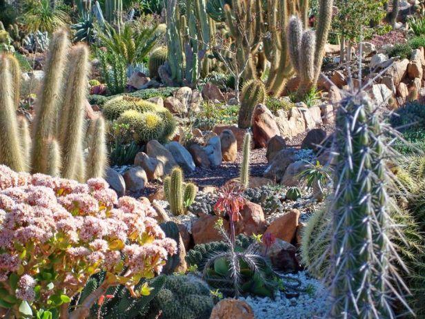 jardin-soekershof-de-plantas-suculentas