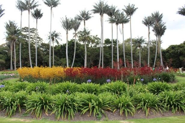 jardin-botanico-celestino-mutis-palms