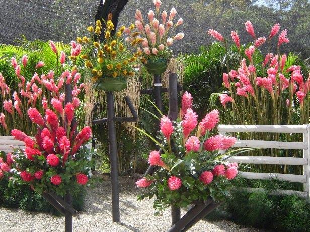 jardin-botanico-de-medellin-alpinia-purpurata
