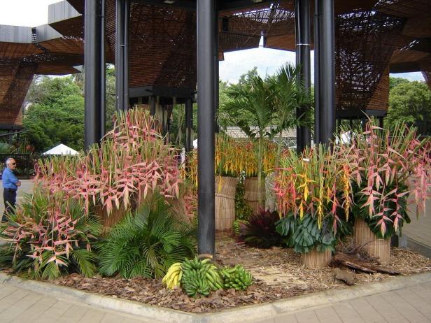 jardin-botanico-de-medellin-heliconias-2_redimensionar