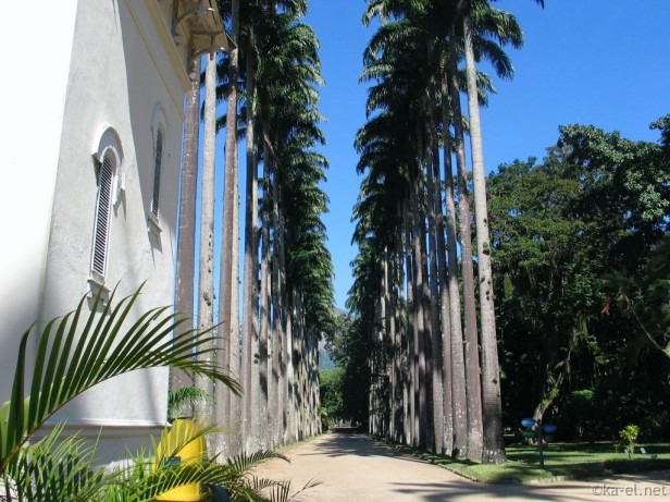 jardin-botanico-de-rio-de-janeiro-13