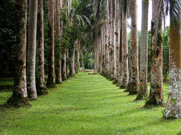 jardin-botanico-lancetilla-xpalm-trees