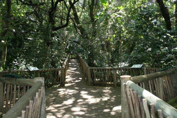 jardin-botanico-naciona-de-lowveld-african_rain_forest
