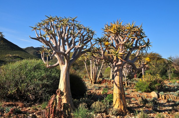 karoo-desert-national-botanical-garden-ajhg
