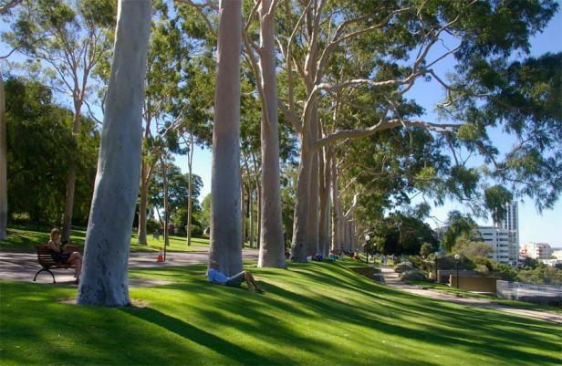 kings_park_perth-fraser-avenue-corymbia-citriodora