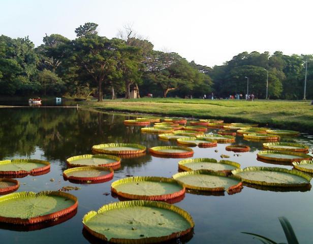 kolkata-botanic-garden-k