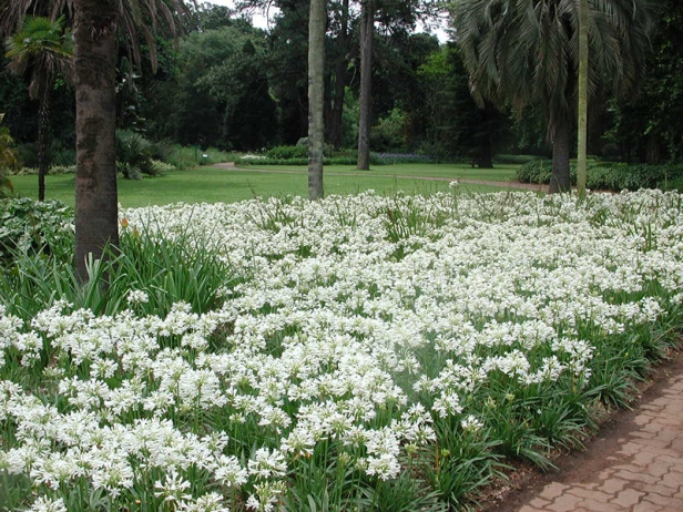 kzn-botanical-gardens-3