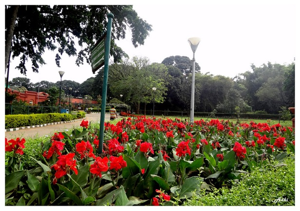 lalbagh-botanical-garden-bangalore-kn-2