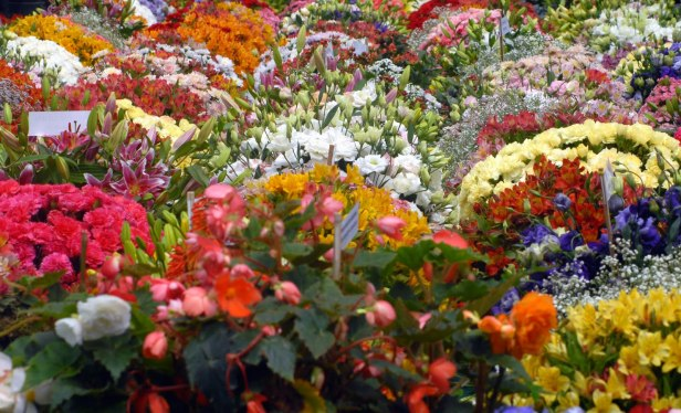 lalbagh-flower-show-bangalore-jy