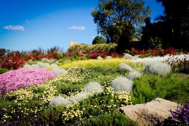 mount-annan-botanic-gardens-dr
